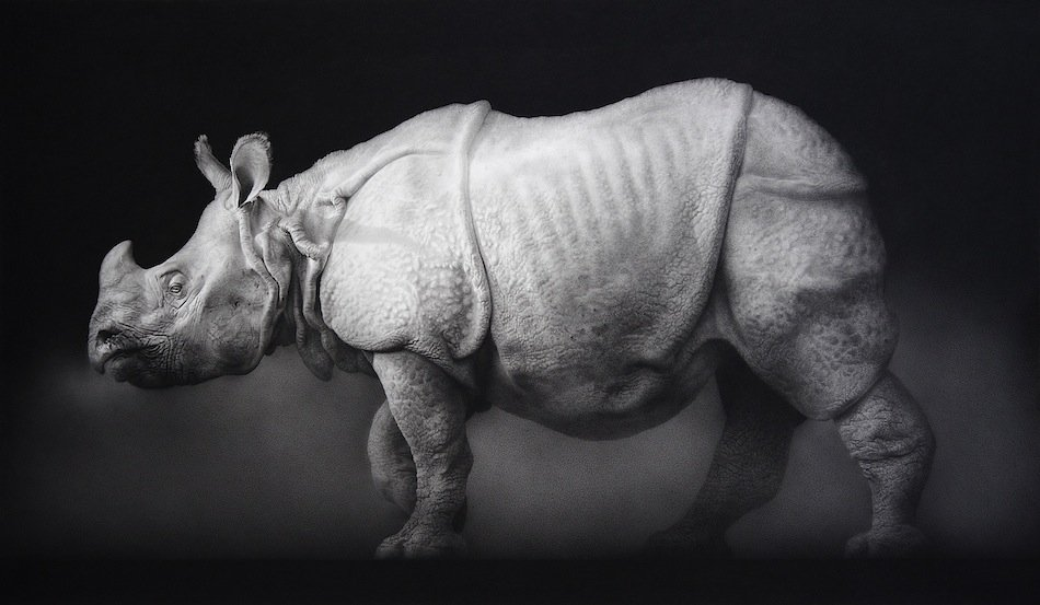 Paul Emsley - Indian Rhinoceros