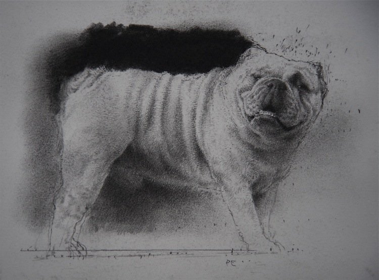 Paul Emsley - Study for a Bulldog